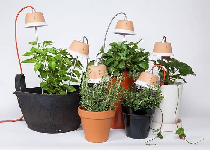 Cynara Bulbo lamp