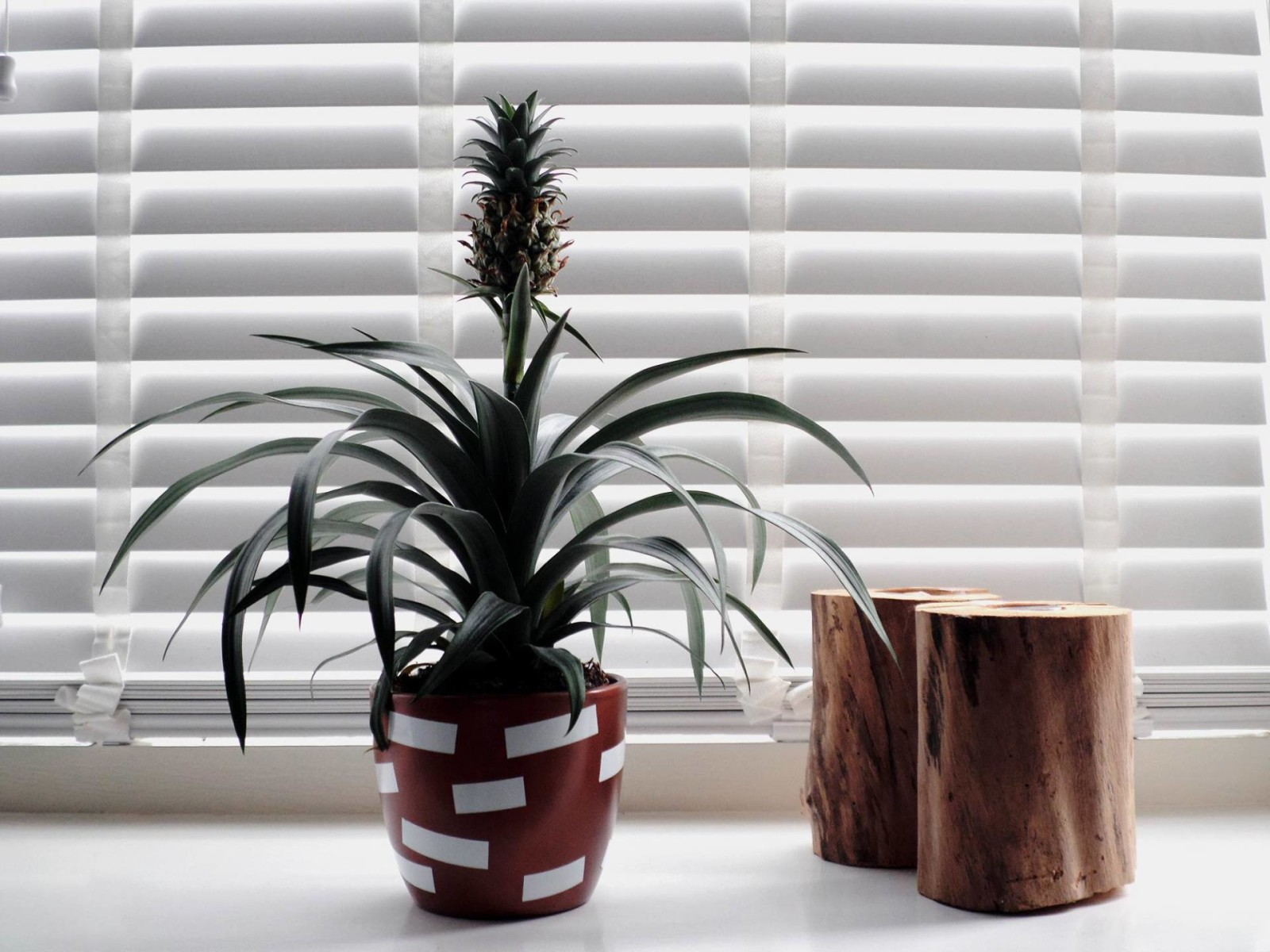 DIY bloempot ananasplant
